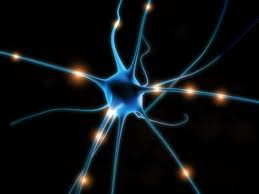 neural_circuits.jpg